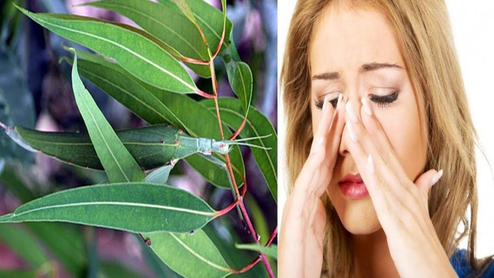 5 bài thuốc Nam trị viêm xoang hiệu quả