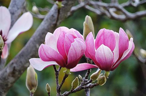 Loài hoa quen thuộc có thể chữa tận gốc bệnh viêm xoang